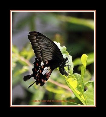 Imágenes de lindas Mariposas