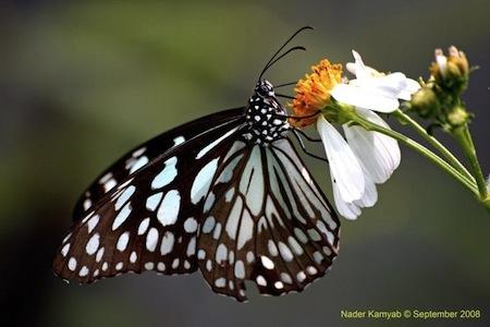 Lindas Mariposas 61 Imágenes de lindas Mariposas