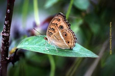 Lindas mariposas 1 Imágenes de lindas Mariposas