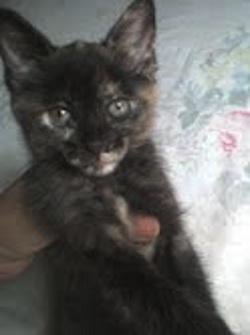 Mascotas de la semana II kitty