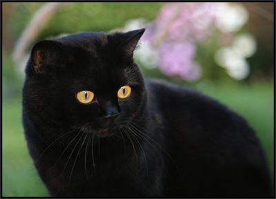 Los mitos del Gato Negro