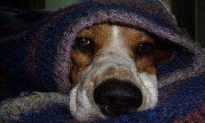 Proteger las mascotas del frio
