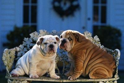 Alimentación de perros obesos