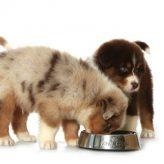 Cómo afecta la falta de Nutrientes a tu Perro