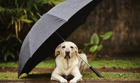 Cómo cuidar tu mascota del calor
