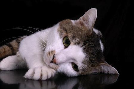 Como cuidar un gato con Depresion