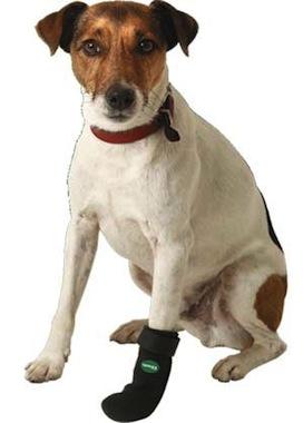 Cómo curar una mascota herida
