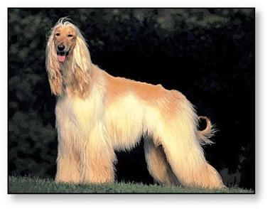 Consejos para el cepillado de tu perro