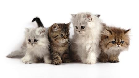 Consejos para la adopcion de un Gato