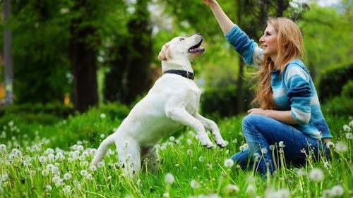 Cuidar con Responsabilidad Nuestra Mascota