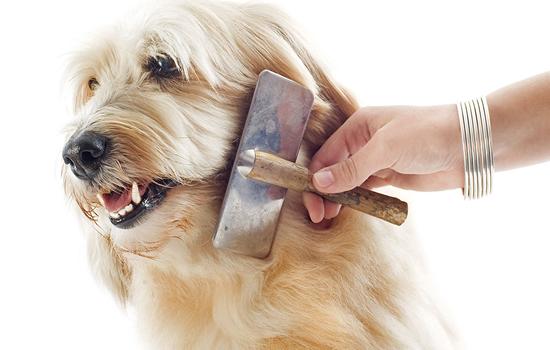 Desenreda fácil el Pelaje de tu Mascota