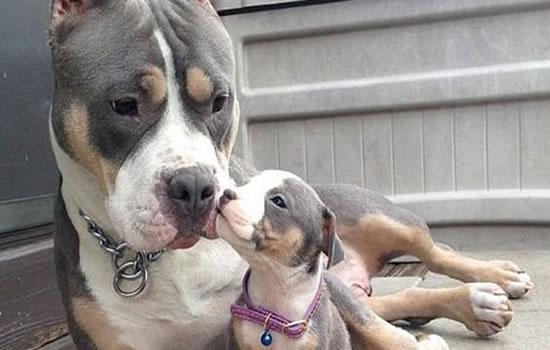 El Perro Potencialmente Peligroso