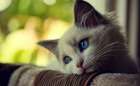 El estornudo en Gatos