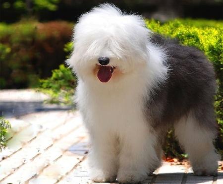 Mejores razas de Perros para Ninos 3