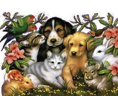 Tener mascotas en casa - Perros para tener en casa ...