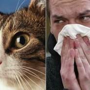 Tratamiento de las alergias en Mascotas