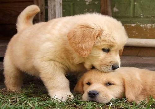 Los cuidados de un cachorro