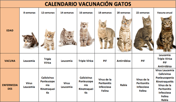 Calendario de Vacunas para Gatos