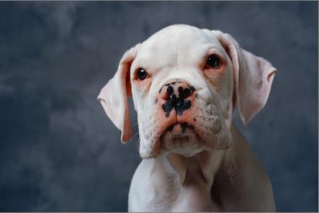 Cáncer de piel en mascotas