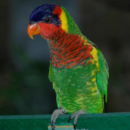 Características de los pájaros