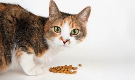 Cuidados y Nutrición del Gato