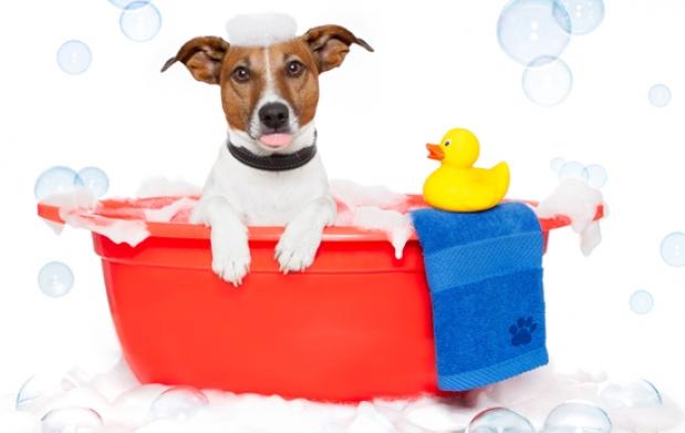 La Higiene de tu Mascota