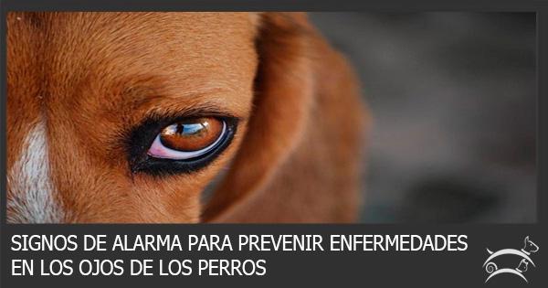 La Queratitis en los Perros
