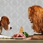 Las Proteínas en la alimentación de los perros