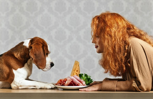 Las Proteinas en la alimentacion de los perros