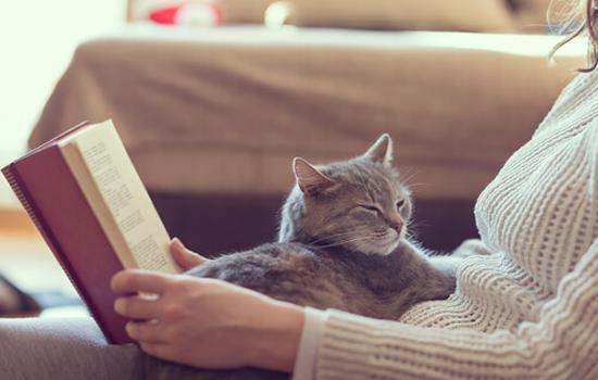 Los beneficios que nos aportan los Gatos