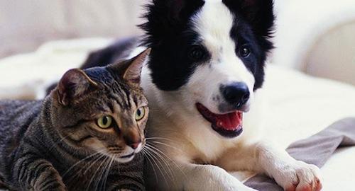 Alergias y parásitos en Mascotas en verano