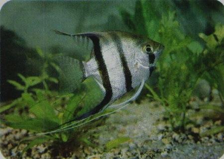 Alimentacion en peces for Peces alimentacion