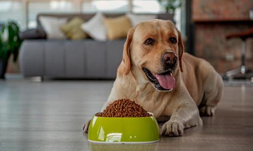 Alimentación de una perra en embarazo