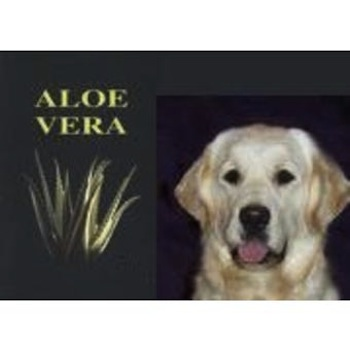 Aloe Vera para perros  Aloe Vera para perros