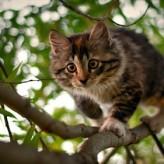 El Gato y sus siete vidas