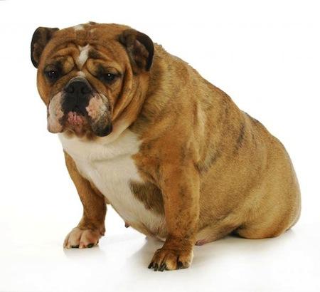La Dieta de una Perra Preñada