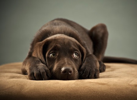 Los perros que le temen a las personas