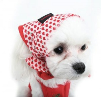 Moda para perras Caniches