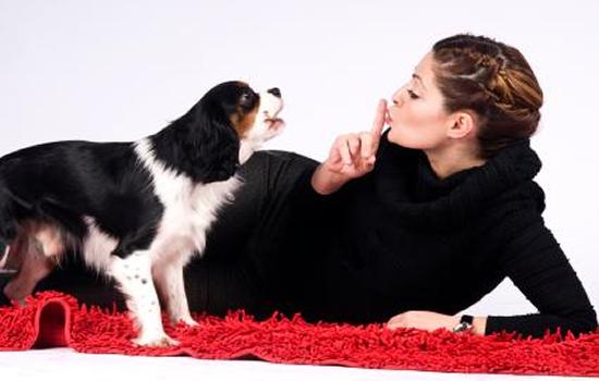 Nuestra comunicación con el Perro