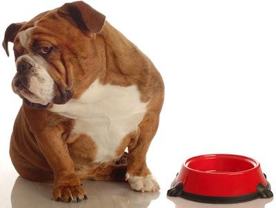 Perros sin apetito Causas
