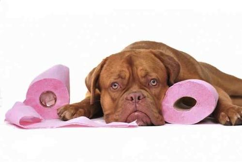 Que causa la diarrea en los Perros