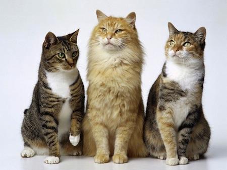 Signos de la edad en el Gato