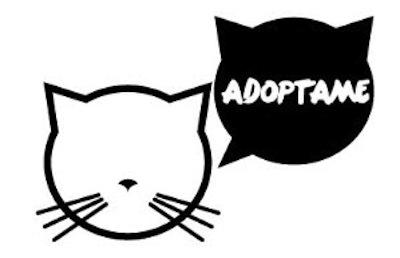 Cómo adoptar un buen Gato