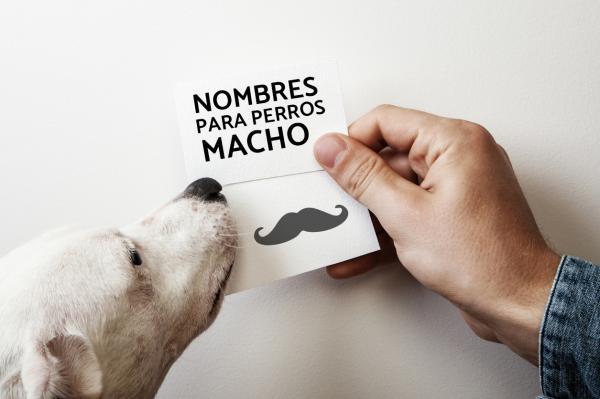 Como elegir un buen nombre para Perros