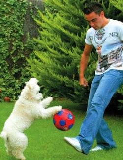 Cómo entretener tu Mascota en casa