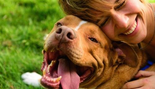 Cómo ser el mejor propietario de un Perro