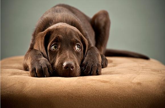 Comportamientos que debes conocer de tu Perro