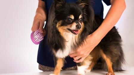 Desenredar el pelaje de nuestras mascotas