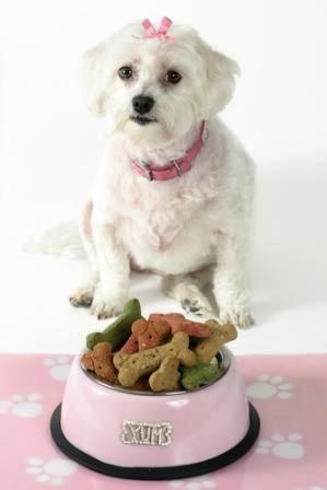 Horarios para alimentacion de Perros