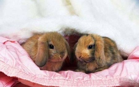 La cría de Conejos